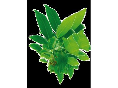 Φροντίδα φυτών